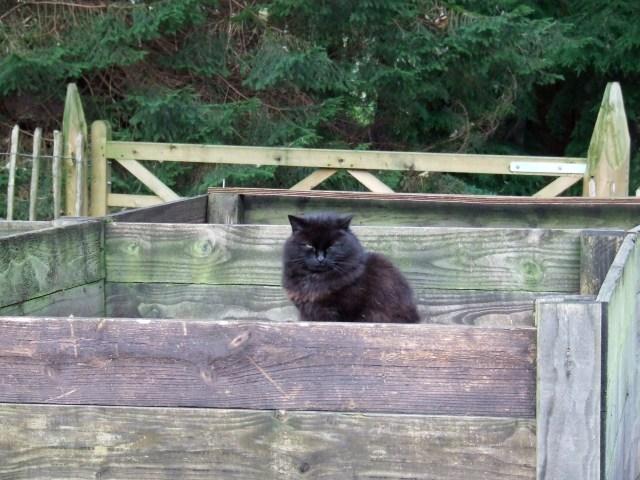 cat in bin