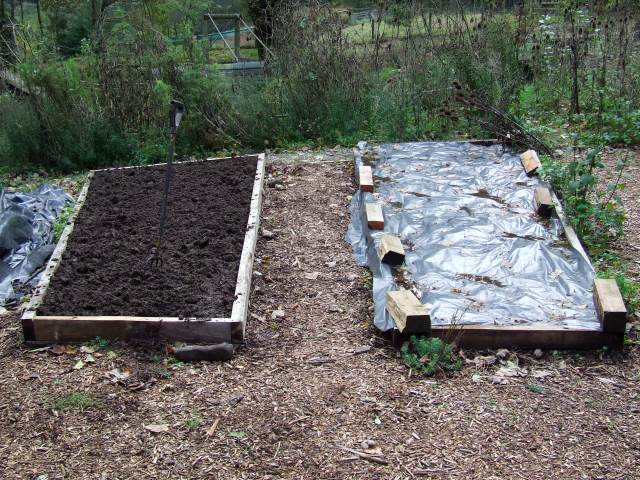 onion beds