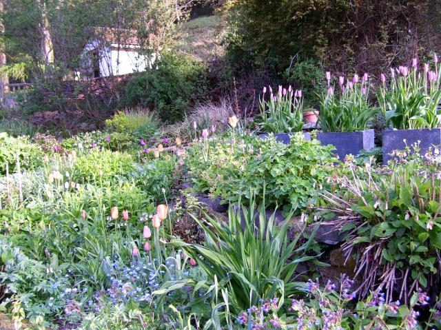 tulips in pots on the terrace