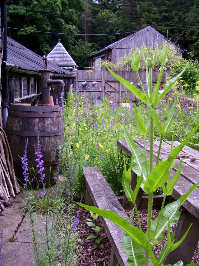 teasels and toadflax