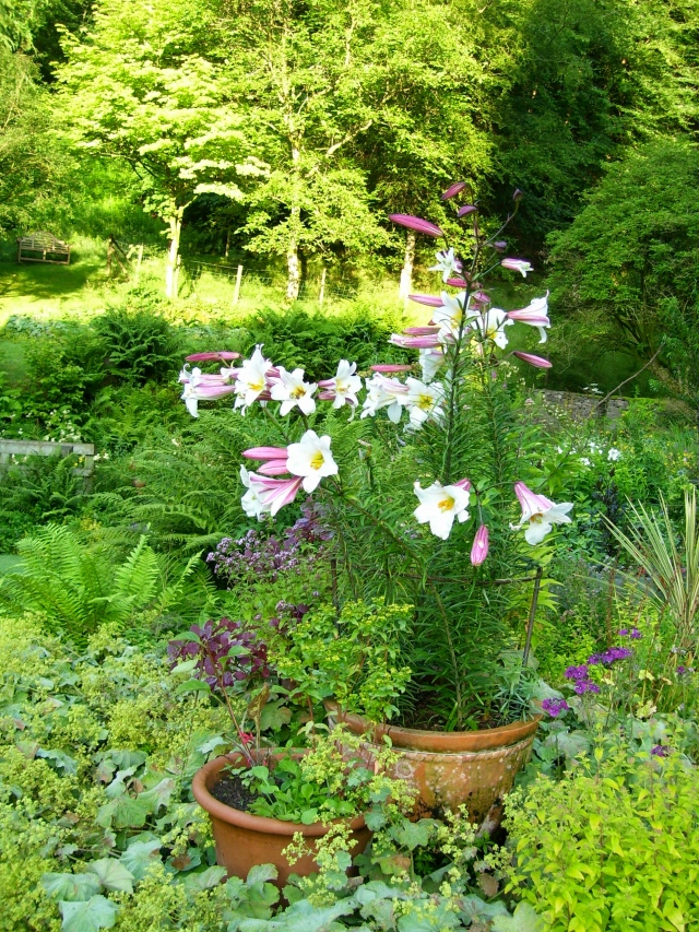 lilies on the terrace