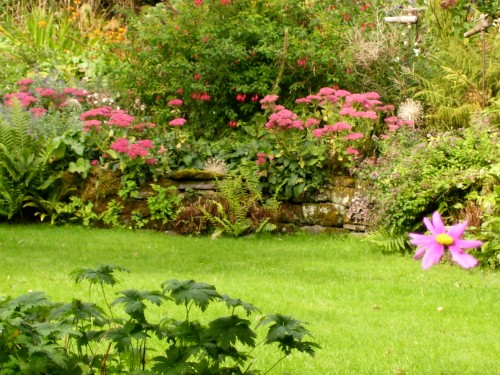 sedum and Mum's fuchsia