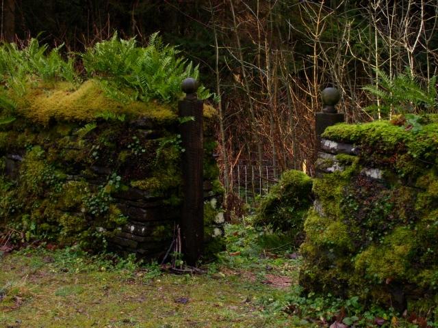 mossy dry stone walls