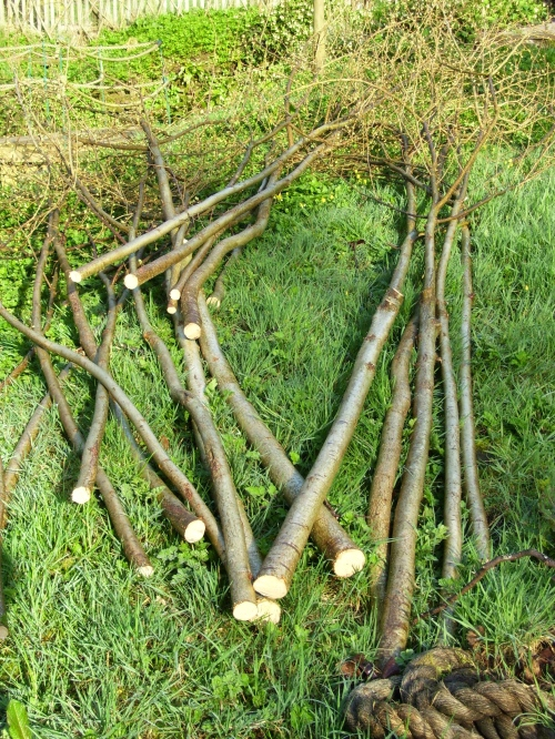hazel rods for runner bean tunnel