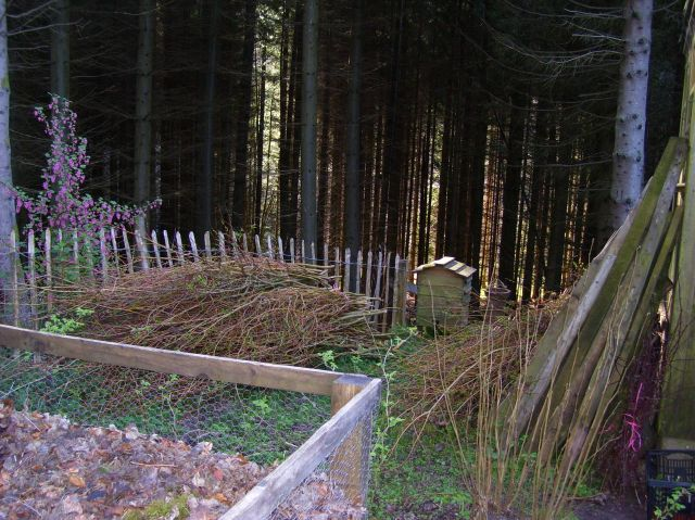 willow for fencing panels