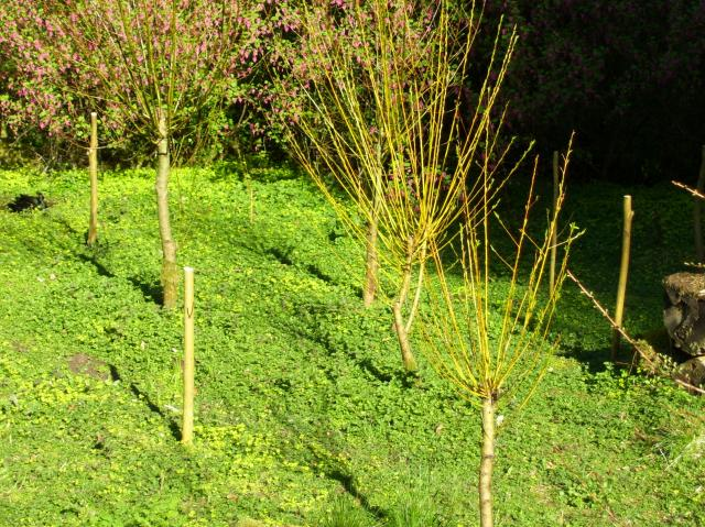 our willow patch