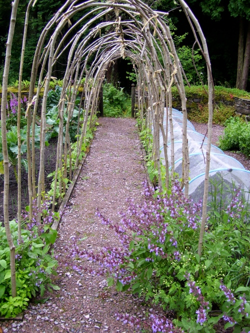 hazel runner bean tunnel