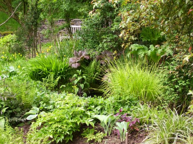 new planting by the pond