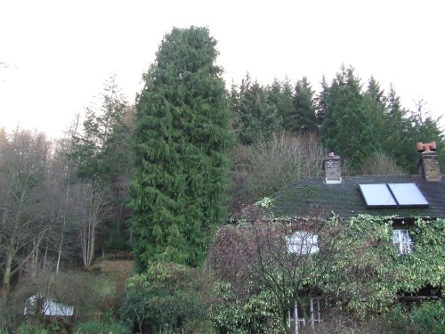 Big Tree - Small House!