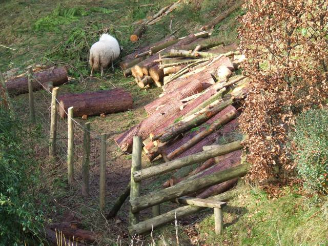 Just some of the timber for moving to the yard