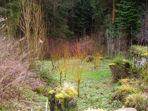 Winter willow colour