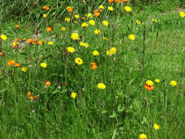 Wildlife friendly grass
