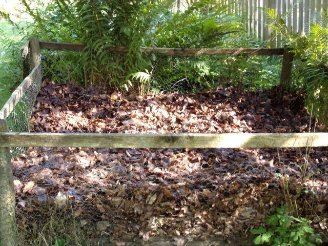 Leafmould - a key ingredient of potting mixture