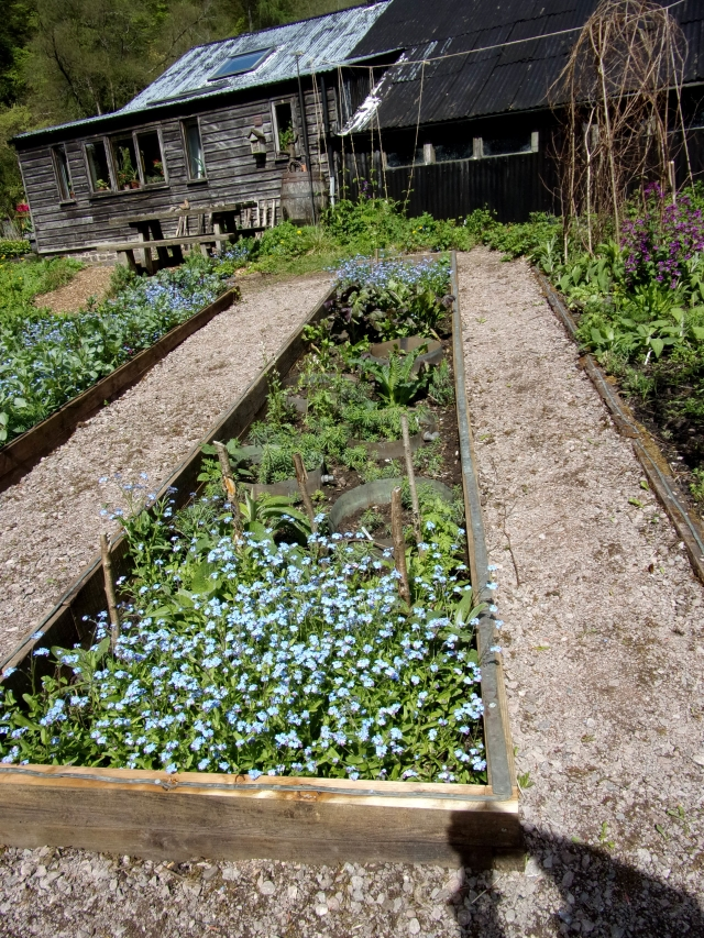 copper pipe around beds and copper rings awaiting courgette plants