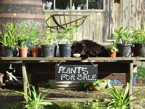 Emily guarding the plants