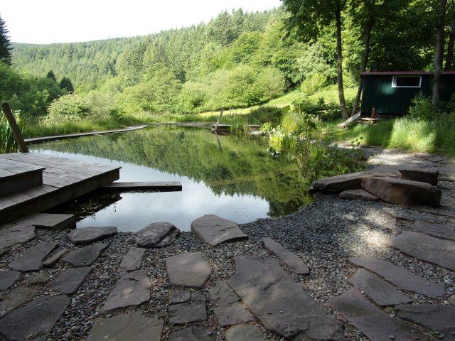 Still life on the pond