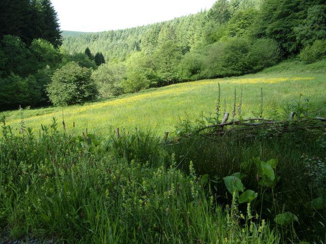 Looking across David's meadow