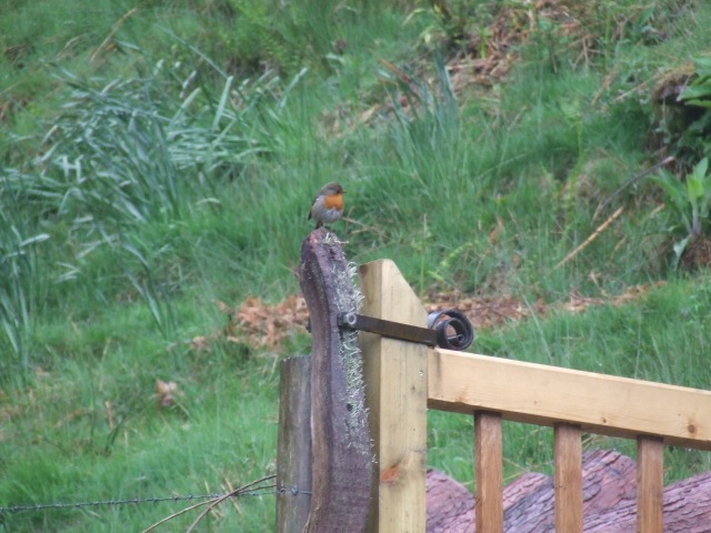Gate catch (and gate but not robin!)