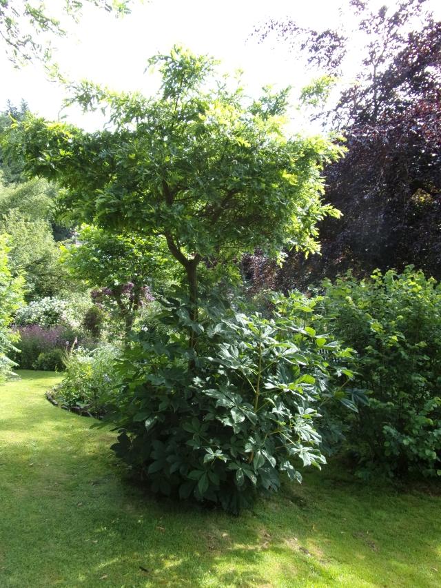 Oak and horse chestnut tree