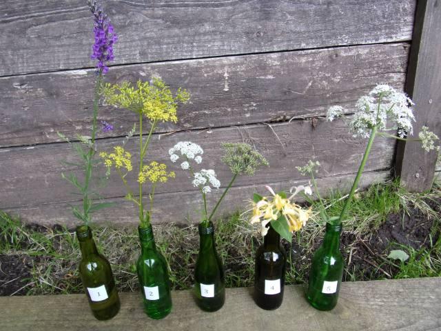 5 bee-friendly plants in flower in our garden