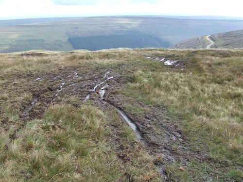 Damage to the bog