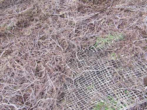 heather 'strewings'