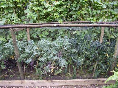 kale and runner beans