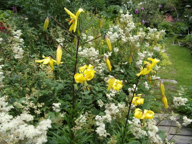 lilies and meadowsweet