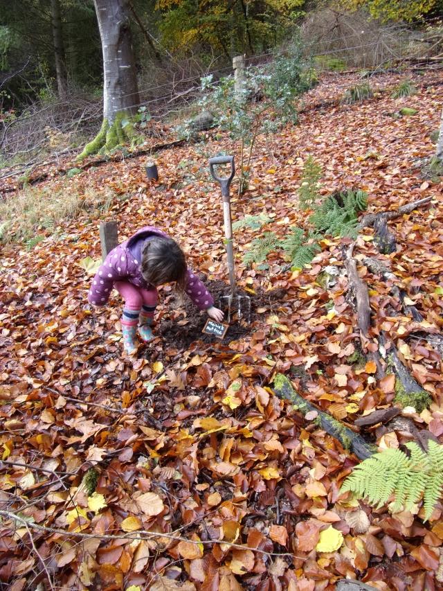 planting Maisie's nut tree