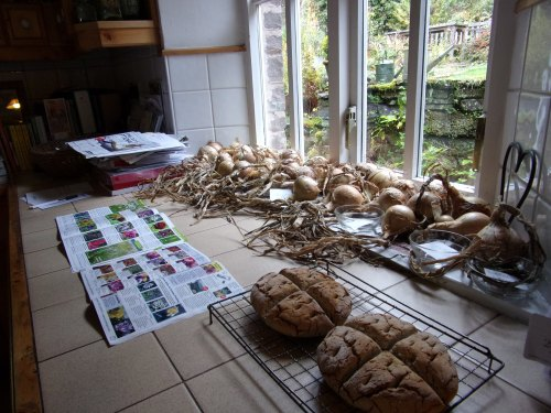 onions drying, a fresh batch of soda bread and tulip catalogues