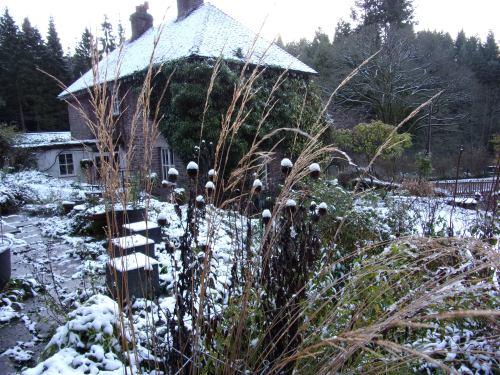 snow-sprinkled echinops