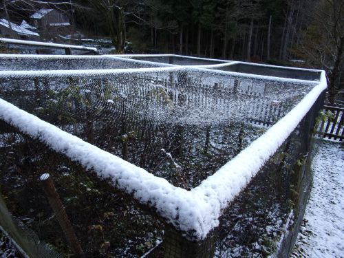snow-sprinkled fruit cages
