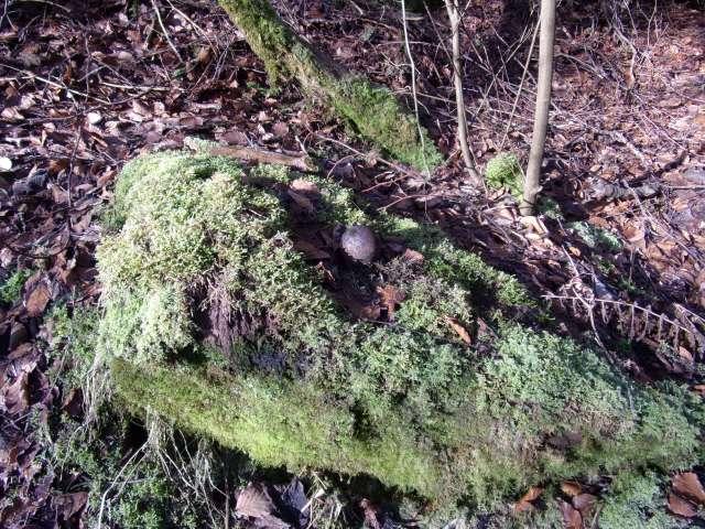 moss sculpture in the garden