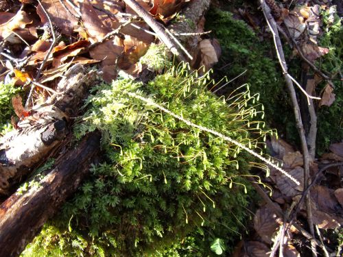 Lovely moss