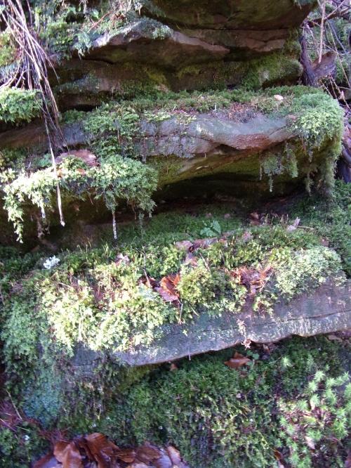 Moss 'garden'