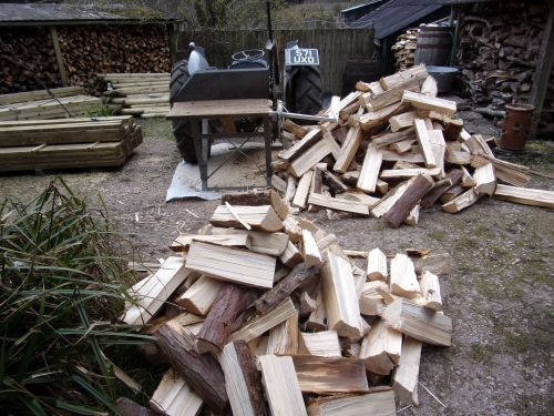 still cutting winter firewood
