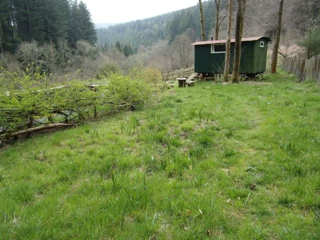 hawthorn hedge next to pond greening up