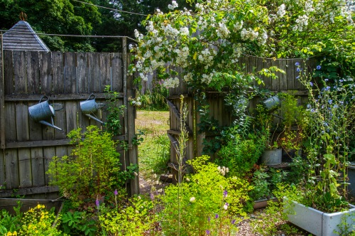 Espalier apples and old tin cans!