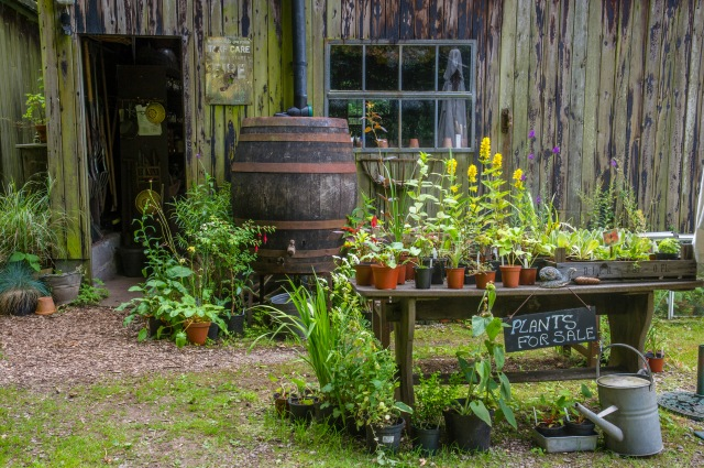 """Outside the """"Operations Room"""" aka the Potting Shed"""