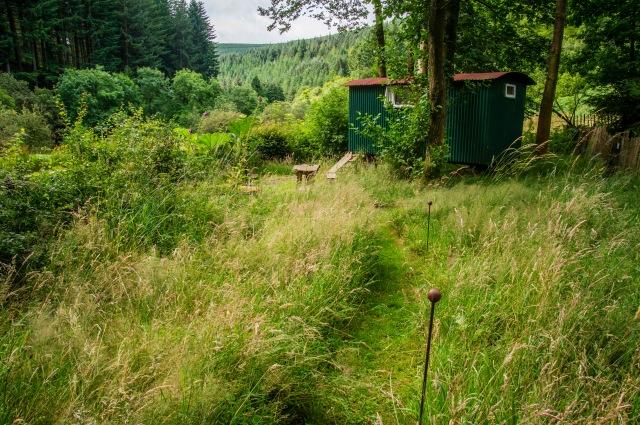 Through the wild flower meadow to the Shepherd's Hut