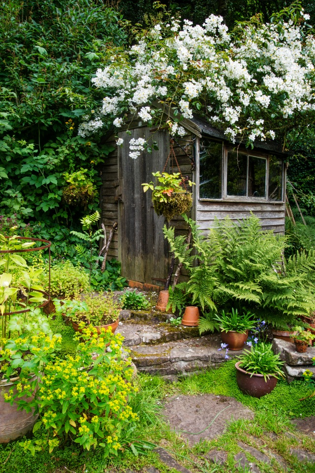 Rose bedecked shed