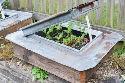 up-cycled mini cold frame