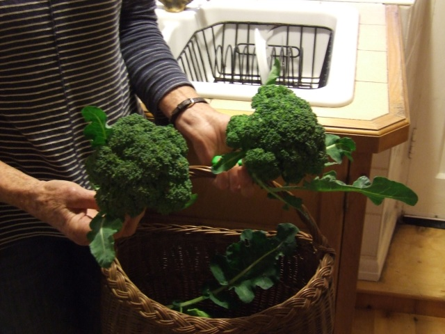 Broccoli in the kitchen