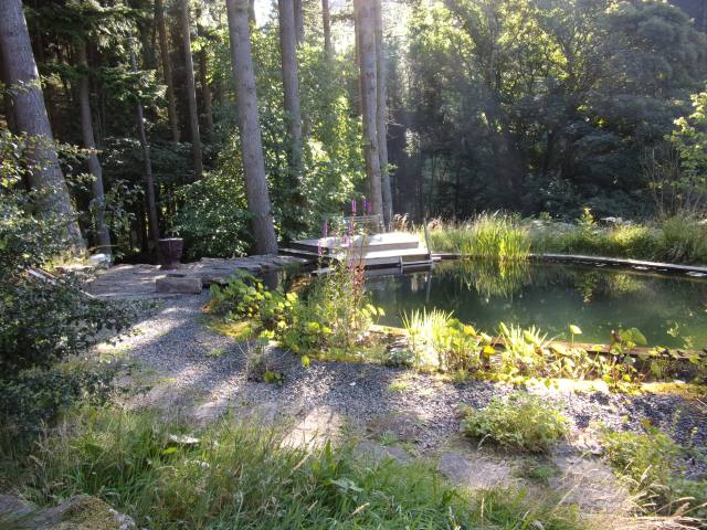 morning sunlight on the swimming pond