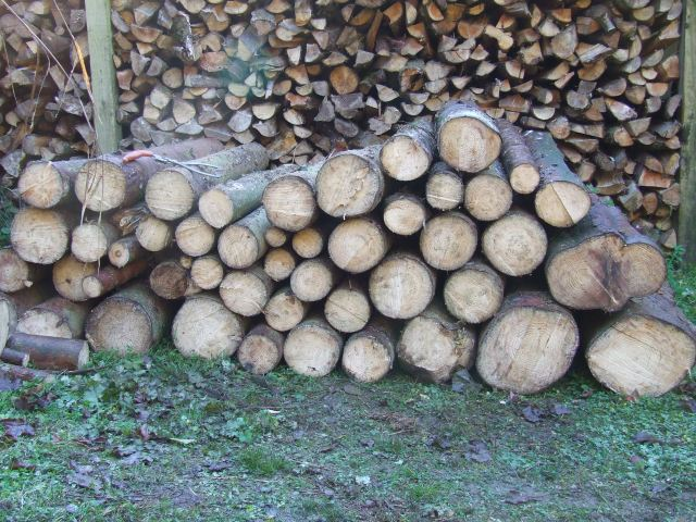 Some of the cut logs