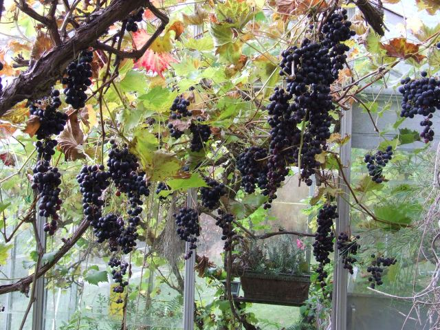 Plenty of low hanging fruit