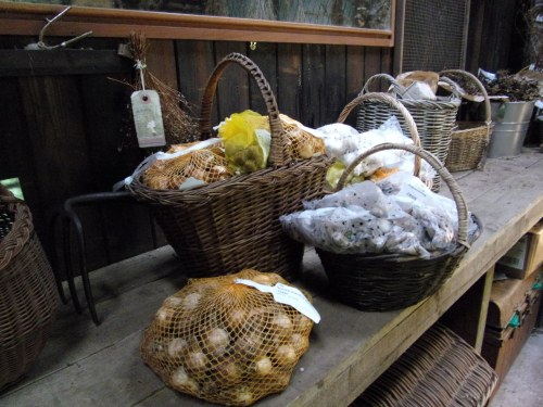baskets of Spring bulbs still to be planted