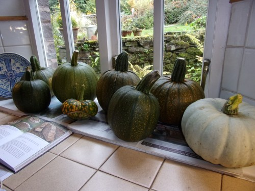 Pumpkins and squashes on the windowsill now